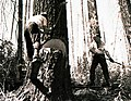 1938. Fallers undercutting fire-killed Douglas-fir. Meehan operation. Tillamook Burn, Oregon. (34020820285).jpg