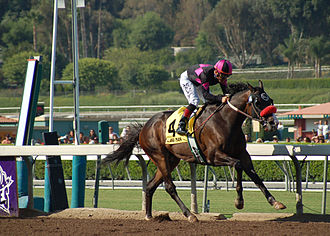 Lava Man - Lava Man (with jockey Corey Nakatani) after crossing the finish line to take 1st place in the 2006 Goodwood Breeder's Cup Handicap.