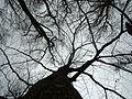 2013-02-03 16-09-07-arbres.jpg