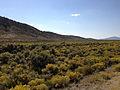 2014-09-09 14 59 51 Rabbitbrush along U.S. Route 50 near Devil's Gate in Eureka County, Nevada.JPG