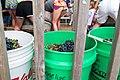 2014 Iowa State Fair (14877410834).jpg