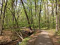 2016-04-25 13 56 35 Walking path along a tributary of Horsepen Run in the Franklin Farm section of Oak Hill, Fairfax County, Virginia.jpg