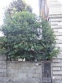 2016-06-20 Firenze 01.jpg