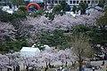 20160403 Himeji-Castle 3358 (26220482414).jpg