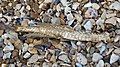 20160528 Whitstable - Fish bone.jpg
