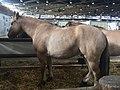 2018Equita-cheval-Henson.jpg