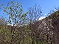 213 La Rovira des del camí de Salelles (Camprodon).JPG