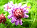 2578 - Innsbruck - Flower.JPG