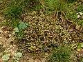 278-Raisins au sol.jpg