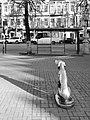 34 Памятник литературному герою книги Г. Н. Троепольского Белому Биму.jpg