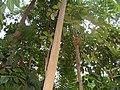 566 Im Botanischen Garten, Tropenhaus.JPG
