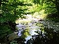 68 Turismo Emilia Romagna 8 giugno 2019 Parco dei laghi di Suviana e Brasimone, un ringraziamento speciale alle guide Eugenia e Walter.jpg