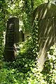 9792viki Cmentarz żydowski na Ślężnej. Foto Barbara Maliszewska.jpg