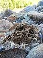 Aşınmış taş.jpg