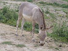 L'âne chez Buridan dans ANE