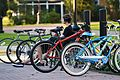 A Man Among Bicycles (8103954575).jpg