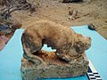 A breastfeed limestone archaeological cat from the temple of Artemis at Alexandria of Egypt.jpg