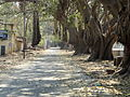 A road at vellore fort.JPG
