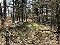 A wooded forest at Rock Creek Crossing in Council Grove, KS (edae2251344e428da927241c3deaa0ec).JPG