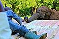 A zoo worker.jpg