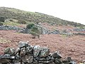 Abandoned croft and intake land on the slopes of Gyrn Goch - geograph.org.uk - 345238.jpg