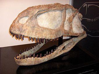 jakie informacje dostarczają datowania względne na temat skamielin