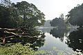 Acharya Jagadish Chandra Bose Indian Botanic Garden - Howrah 2011-01-08 9733.JPG