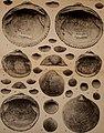 Actes de la Société linnéenne de Bordeaux (1912) (16772318115).jpg