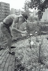 Adam Purple Tending his garden..jpg