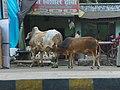 Agra 60 - Taj Ganj shopping (27110022557).jpg