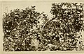 Agricultural Nevada (1911) (17942208272).jpg