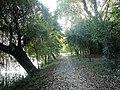 Alee pavata cu frunze moarte de toamna in Herastrau.jpg