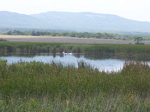 Alepu - Image: Alepou Bulgaria swans
