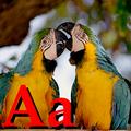 Alfabet zwierząt - literka A.png