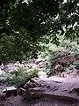 Algerie Blida Chiffa Source de Singes (44).jpg