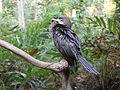 Allepy Backwaters Water Crow.jpg