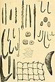 Allgemeine Fischerei-Zeitung (1905) (17488721993).jpg