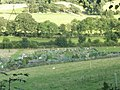 Allotments just past the new cemetery at Church Stretton - geograph.org.uk - 1448938.jpg