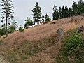 Altkoenig-JR-G6-1726-2007-07-08.jpg