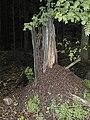 Ameisenbau-1.jpg