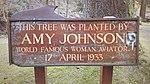 Amy Johnson's tree.jpg