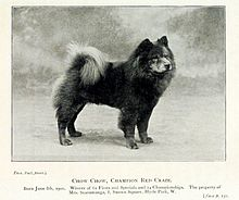 Chow Chow in 1901