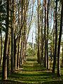 Ankarada ağaç.JPG