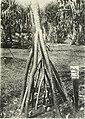 Annales du Jardin botanique de Buitenzorg (18382390706).jpg