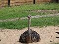 Antwerp Zoo (12210721644).jpg
