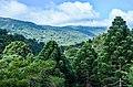 Araucárias De Monte Verde Mg Serra Da Mantiqueira Brasil (131339749).jpeg