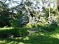Arbres au jardin Albert Kahn 8.JPG
