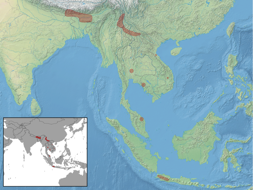 Arielulus circumdatus distribution (colored)