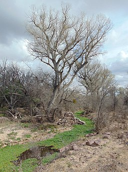 Arivaca Creek Buenos Aires National Wildlife Refuge 2015.JPG