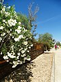 Armona Island (Portugal) (49224250458).jpg